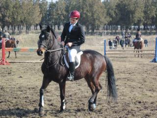 MA33-hästträning